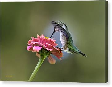 Hummingbirds Pure Goodness Canvas Print by Christina Rollo