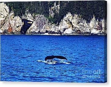 Humpback Whale Alaska Canvas Print by Thomas R Fletcher
