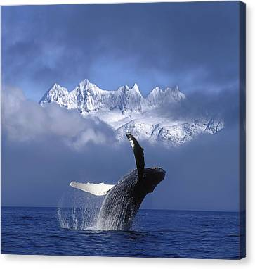 Humpback Whale Breaches In Clearing Fog Canvas Print by John Hyde