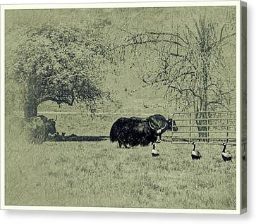 Hurry Mildred Those Guys Look Dangerous Canvas Print by Diane Schuster