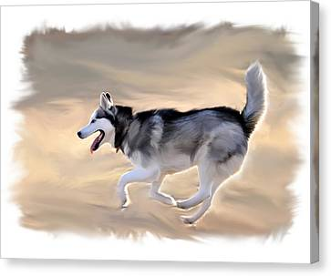 Siberian Husky At Play Canvas Print by Kevin Pate