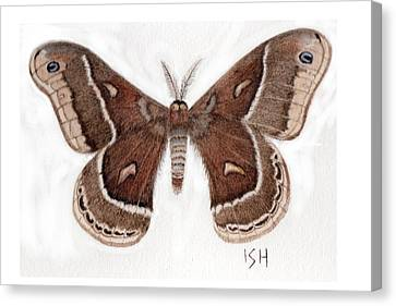 Hyalophora Cecropia/gloveri Hybrid Moth Canvas Print by Inger Hutton