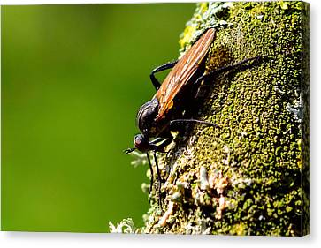 Hymenoptera Canvas Print by Toppart Sweden