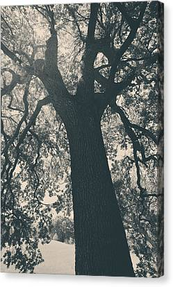 I Can't Describe Canvas Print by Laurie Search