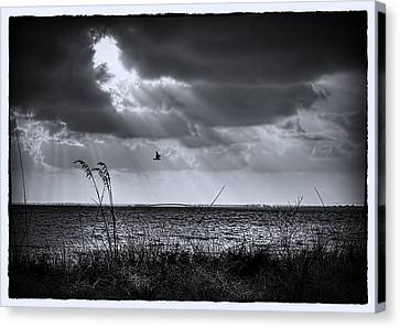I Fly Away Canvas Print by Marvin Spates