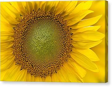 I Got Sunshine Canvas Print by Susan Candelario