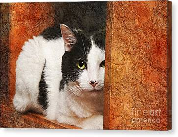 I Have My Eye On You Canvas Print by Andee Design