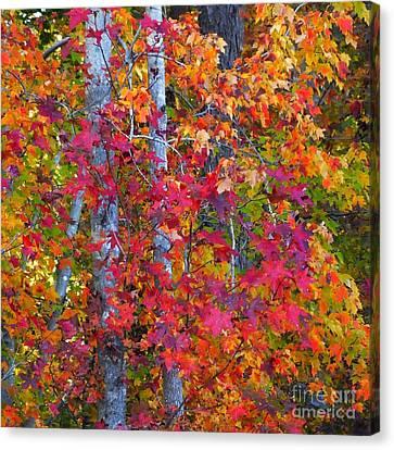 I Love Fall Canvas Print by Scott Cameron