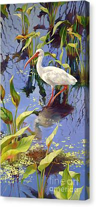 Ibis Deux Canvas Print by Laurie Hein