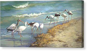 Ibis On Marco Island Canvas Print by Laurie Hein