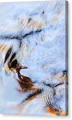 Icarus Canvas Print by Elzbieta Weron