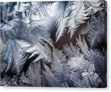 Ice Crystals Canvas Print by Scott Norris