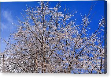 Ice Ladened Tree With Blue Skies Canvas Print by Jane McBride