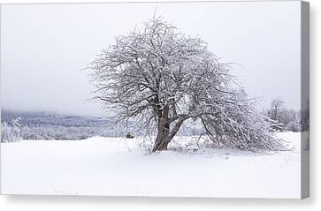 Iced Over Canvas Print by Patrick Downey