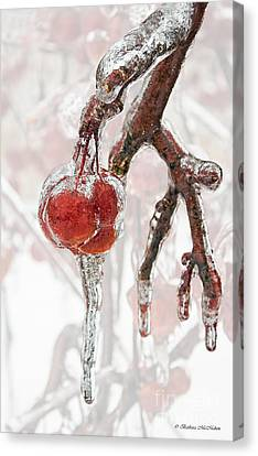 Iced Red Cherries Canvas Print by Barbara McMahon