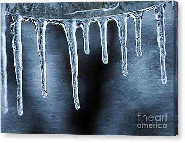 Icicles Canvas Print by Darren Fisher
