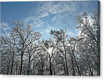 Icy Forest Canvas Print by Dawdy Imagery
