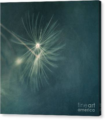 If I Had One Wish II Canvas Print by Priska Wettstein