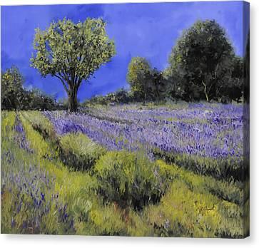 Il Campo Di Lavanda Canvas Print by Guido Borelli