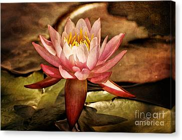 Illusory Lily Canvas Print by Lois Bryan