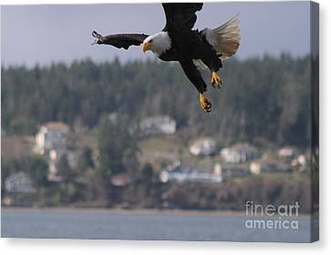 I'm Coming In For A Landing Canvas Print by Kym Backland