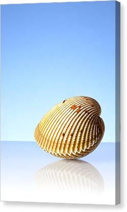 Imaginary Beach Canvas Print by Jim Hughes