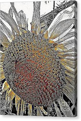 Imagine The Color Canvas Print by Michael Hoard