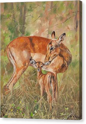 Impala Antelop Canvas Print by David Stribbling