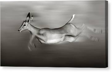 Impala Running  Canvas Print by Johan Swanepoel