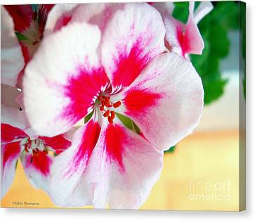 Imperial Geranium  Canvas Print by Ramona Matei