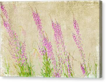 Impressions Of Spring Canvas Print by Bonnie Bruno