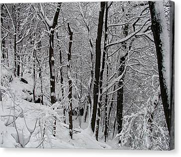 In A Winter Wonderland Canvas Print by Bill Cannon
