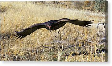In Coming Canvas Print by Randall Ingalls