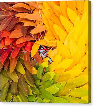 In Living Color Canvas Print by Aaron Aldrich