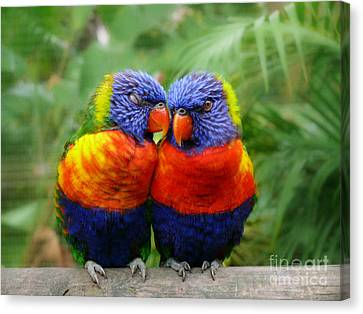 In Love Lorikeets Canvas Print by Peggy  Franz