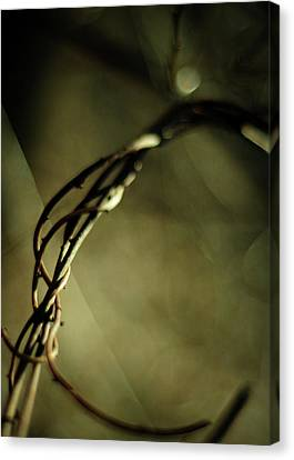 In Shadows And Light Canvas Print by Rebecca Sherman