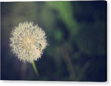 In The Afterglow Canvas Print by Laurie Search