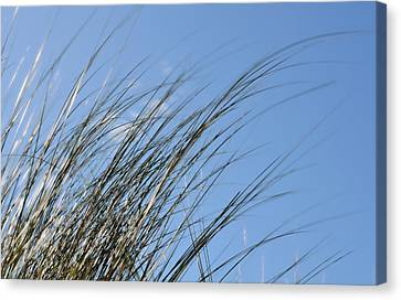 In The Breeze - Soft Grasses By Sharon Cummings Canvas Print by Sharon Cummings