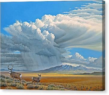 In The Foothills-mule Deer Canvas Print by Paul Krapf
