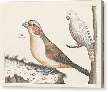 In The Foreground A Crossbill, Right On A Branch A White Canvas Print by Anonymous