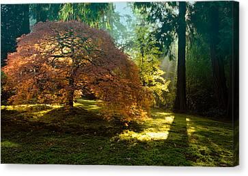 In The Gentle Autumn Light Canvas Print by Don Schwartz