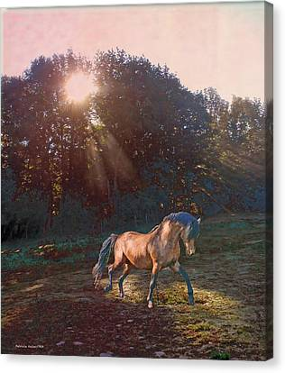 In The Light Canvas Print by Patricia Keller