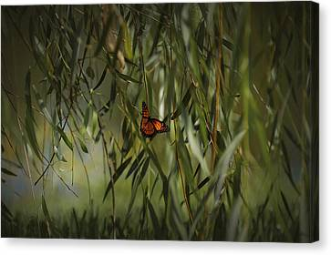 in the memory of Papillon Canvas Print by Mario Celzner