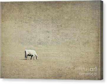 In The Pasture Canvas Print by Elena Nosyreva
