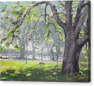 In The Shade Of The Big Tree Canvas Print by Ylli Haruni
