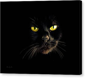 In The Shadows One Black Cat Canvas Print by Bob Orsillo