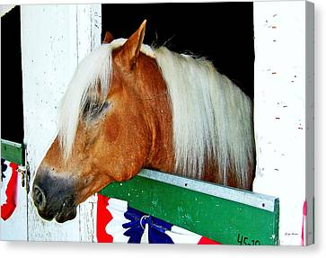 In The Stable 002 Canvas Print by George Bostian