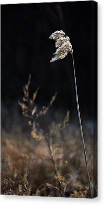 In The Wind Canvas Print by JC Findley