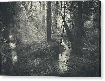 In This Silence Canvas Print by Laurie Search
