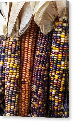 Indian Corn Close Up Canvas Print by Garry Gay
